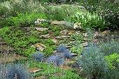 Rock border with Jenny's stonecrop (Sedum reflexum) 'Angelina' , Aizoon stonecrop (Phedimus aizoon), Fortune meadowsweet (Spiraea japonica) 'Shirobana', Fescue (Festuca glauca) 'Intense blue', terracotta path borded with Kidney weed (Dichondra repens), Euphorbia (Euphorbia characias), Feather grass (Stipa tenuissima), Ariege, France