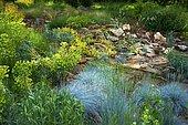 Fescue (Festuca glauca) 'Intense blue', Euphorbia (Euphorbia characias) at the bottom a rock garden with Houseleeks (Sempervirens sp), Ariege, France