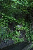 Laundry surrounded by vegetation, Ariege, France