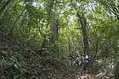 Ornithologues à la recherche de Manakin à tête d'or sur le sentier de Nando au Canopy Camp, Darién, Panama