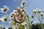 Young girl in field of Ox-eye Daisies North Norfolk, England, summer