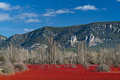 Wicker, Ruta del Mimbre, Cuenca, Castilla - La Mancha, Spain, Europe