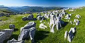 Limestone pavement, Ordesa valley, Ordesa y Monte Perdido National Park, Huesca, Aragon, Spain, Europe