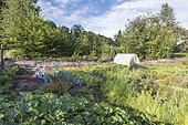 Organic vegetable garden in summer, France,