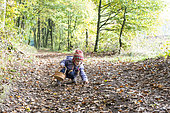 Little girl picking up acorns and chestnuts in the forest in autumn, Moselle, France