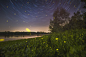 Night among star and fireflies, side of the Po river in the north of Italy
