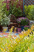 Flowered terrace in spring