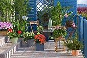 Flowered balcony : Showy Medinilla (Medinilla magnifica), Azalea (Rhododendron sp), Abutilon (Abutilon sp), Begonia (Begonia sp), Groundsel (Senecio sp), Pelargonium (Pelargonium sp), Grévillea (Grevillea juniperina), Agapanthe (Agapanthus sp), Marguerite (Argyranthemum sp) in spring