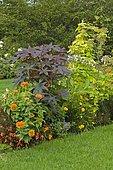 Castorbean (Ricinus communis) and Hop (Humulus sp)