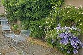 "Flowered terrace with deckchairs. Clematis (Clematis 'Lawsoniana'), Rose (Rosa sp). ""Jardin de la Chaux"", Burgundy, France"