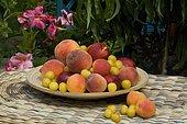 Abricot (Prunus armeniaca), Nectarine (Prunus persica), Pêche (Prunus persica), Prune 'Mirabelle de Nancy' (Prunus domestica) dans un plat