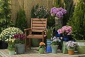 "Pots on flowered terrace : Phlox (Phlox sp), Marguerite Daisy (Argyranthemum frutescens), French hydrangea (Hydrangea macrophylla), Rhododendron (Rhododendron sp), Colorado Blue Columbine (Aquilegia caerulea), Colorado Blue Columbine (Aquilegia caerulea), Dahlia (Dahlia sp), Common Snapdragon (Antirrhinum majus), Arum (Zantedeschia sp), Fuchsia (Fuchsia sp), Woodland sage (Salvia nemorosa), Mandatory mention: ""Villaverde 89 & quo"