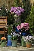 "Pots on flowered terrace : Phlox (Phlox sp), French hydrangea (Hydrangea macrophylla), Rhododendron (Rhododendron sp), Colorado Blue Columbine (Aquilegia caerulea), Colorado Blue Columbine (Aquilegia caerulea), Dahlia (Dahlia sp), Common Snapdragon (Antirrhinum majus), Arum (Zantedeschia sp), Fuchsia (Fuchsia sp), Woodland sage (Salvia nemorosa), Mandatory mention: ""Villaverde 89"""