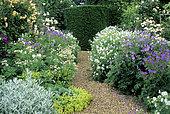 Gravelled driveway and perennial Geranium (Geranium sp), Masterwort (Astrantia major), Rose (Rosa sp), Alpine lady's mantle (Alchemilla mollis) in summer