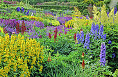 Perennial bed with Delphinium (Delphinium sp), Loose-strife (Lysimachia sp), Lupine (Lupinus sp), Floors Castle, Scotland. Spring-Summer