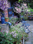 Small flowered courtyard in June with Felicia (Felicia sp), Lobelia (Lobelia sp), Clematis (Clematis sp), Petunia (Petunia sp), Pansy (Viola sp), Solanum (Solanum sp), Jardin de M. et Mme Vuylsteke, Belgium