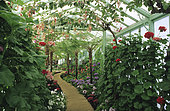 Flowered greenhouse. Royal Greenhouses of Belgium.