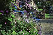 Front garden : Lavender (Lavandula angustifolia) 'Hidcote Blue', Eryngo (Eryngium sp), Glazeley, Old Rectory, Shropshire
