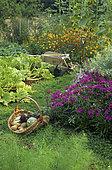 Wheelbarrow in an organic vegetable garden full of flowers in summer