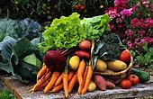 Still life of summer vegetables