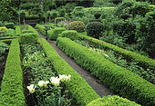 Boxwood hedge (Buxus sp), Ornamental garlic (Allium sp), Tulip (Tulipa sp), Holly (Ilex sp), Private garden, Belgium