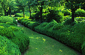 Lawn path lined with Boxwood (Buxus sempervirens) and Ivy (Hedera helix).