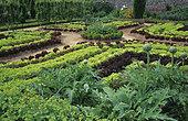 Flowered structured vegetable garden: Artichoke (Cynara scolymus). Salad (Lactuca sp). Lady's mantle (Alchémilla sp). Floral Park of Upper Brittany, France