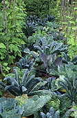 Vegetable garden 'Tuyaux de St Guy'. Cabbage (Brassica oleracea). Chard (Beta vulgaris). Garden Festival Chaumont-sur-Loire. Summer