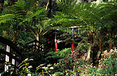 Tropical garden of Monte-Pont. Madeira