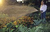 Young girl watering the vegetable garden in summer