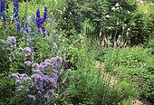 Jardin sauvage : Campanula lactiflora (campanule), Linaria purpurea, Delphinium, Mr et Mme Broeckaert, Belgique