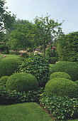 Topiary of Boxwood (Buxus sp) and Ivy (Hedera helix)