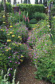 Allée gravillonnée, Lupinus, Alchemilla, Phlomis russeliana, Geranium 'Claridge Rose', Hall Farm, Angleterre