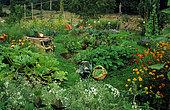 Organic vegetable garden full of flowers in summer