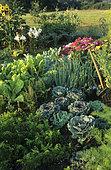 Flowering Vegetable Garden : Carrot (Daucus carota), Cabbage (Brassica oleracea), Corn (Zea mays), Lily (Lilium sp), Chard (Beta vulgaris)