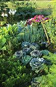 Flowered vegetable garden in summer