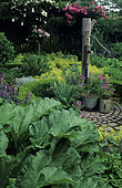 Ornate vegetable garden with Rhubarb (Rheum rhaponticum) and Water pump, Garden of Mr and Mrs Deferme, Belgium.