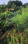 Flowered vegetable garden: Venice Linen (Linum grandiflorum rubrum), Fennel (Foeniculum vulgare), Rhubarb (Rheum rhaponticum), Chard (Beta vulgaris) in summer.