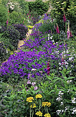 Perennial Plant Scene: Geranium Alley (Geranium x magnificum), Dame's Rocket seed (Hesperis matronalis), Jerusalem Sage (Phlomis fruticosa), Snowshill Manor, National Trust, Gloucestershire, England