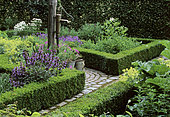 Garden of herbs and flowers: Sage (Salvia sp), Oregano (Origanum sp), Roman Chamomile (Chamaemelum nobile), Mr and Mrs Deferme's Garden, Belgium