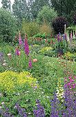 Creeping Charlie (Nepeta sp), Lupine (Lupinus sp), Alpine lady's mantle (Alchemilla mollis), Oriental poppy (Papaver orientale), Geranium (Geranium sp), Foxglove (Digitalis sp), Private garden in Belgium.
