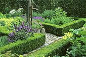 Garden of herbs and flowers: Sage (Salvia sp), Oregano (Origanum sp), Chamomile (Anthemis sp), Mr and Mrs Deferme's Garden, Belgium