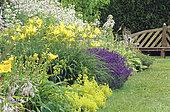 Yellow bed with Hemerocallis (Hemerocallis sp), Lavender (Lavandula sp), Lady's mantle (Alchemilla sp), Bellflower (Campanula sp) in summer, Le Château de Touffou, Vienne, France