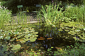 Water Garden: Goldfishes in Pond and Terrace in a Private Garden, Belgium