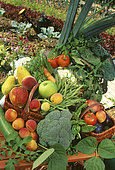 Still life of fruits and vegetables: Broccoli (Brassica oleracea var. Italica), Green bean (Phaseolus vulgaris), Tomato (Solanum lycopersicum), Peach (Prunus persica), Leek (Allium porrum), Apple (Malus communis), Pear (Pyrus communis), Carrot (daucus carota)