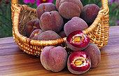 Pêche 'Sanguine vineuse' (Prunus persica), fruits dans un panier