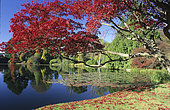 Lake Sheffield Garden: Vegetation around the lake and Water Planting in Autumn, Sussex, England