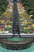 Waterfall: Water staircase with Pansy (Viola sp), Narcissus (Narcissus sp), Tulip (Tulipa sp). Mainau Garden, Lake Constance, Baden-Württemberg, Germany