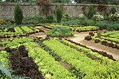 Row of salads, vegetable garden. Haute Bretagne Floral Park. France