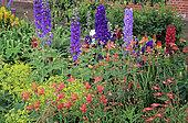 Flower bed with Parrotlily (Alstroemeria sp), Lupine (Lupinus sp), Delphinium (Delphinium sp, Alpine lady's mantle (Alchemilla mollis), Floors Castle, Scotland